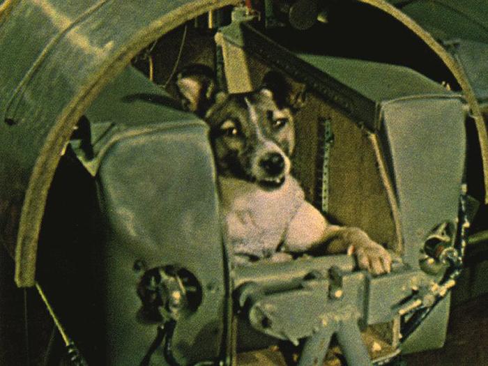 Неизвестная история Лайки, первой собаки-космонавта