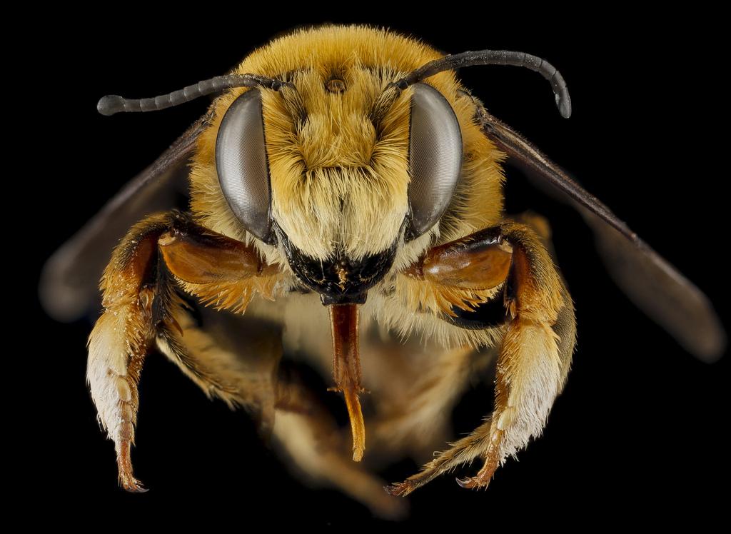 Как изменится мир, если исчезнут пчелы
