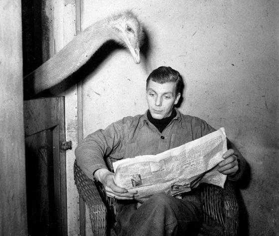 http://russian7.ru/wp-content/uploads/2014/05/paper_bird.jpg