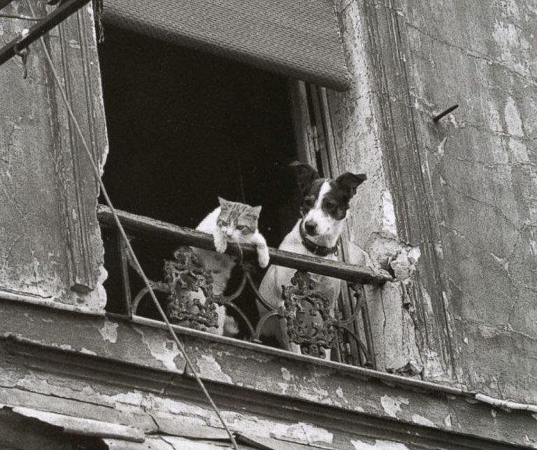 Собаки и кошки: кто умнее (6 фото)