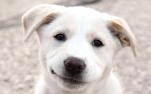 http://russian7.ru/wp-content/uploads/2014/06/Smiling_Dog_Face.jpg