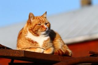http://russian7.ru/wp-content/uploads/2014/06/the-cat-339141_640-320x213.jpg