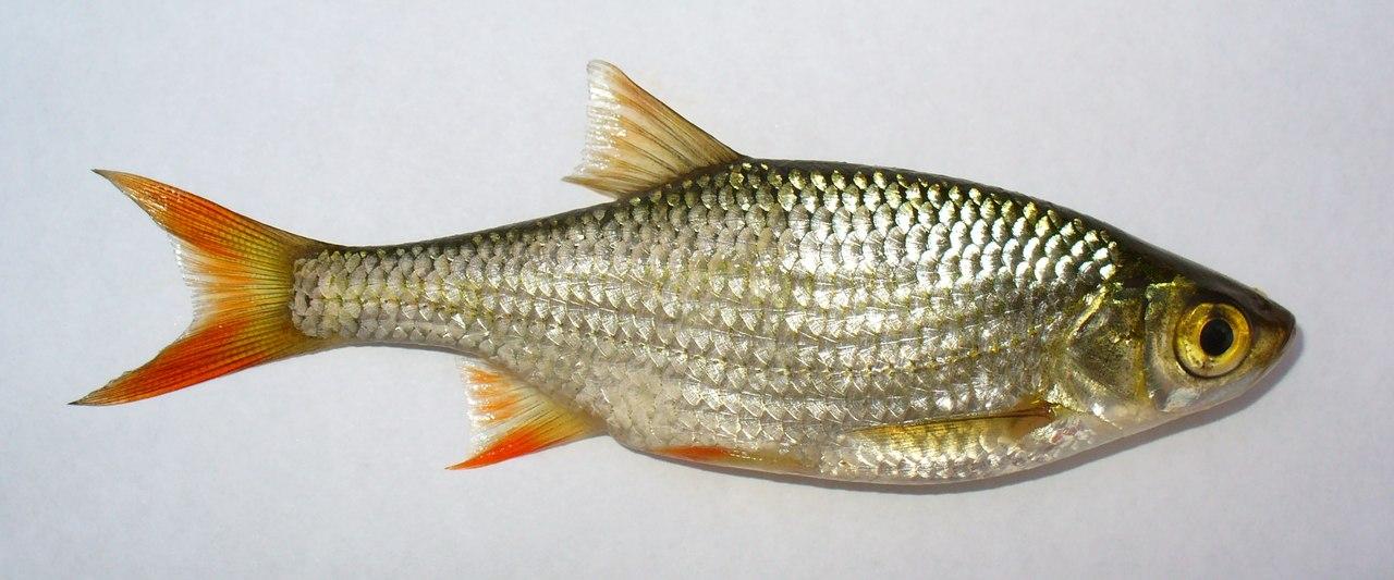 чем подкормит что рыба клевала