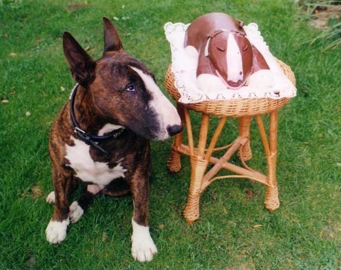 Собаки в Казани продажа с фото цены  купить щенка и