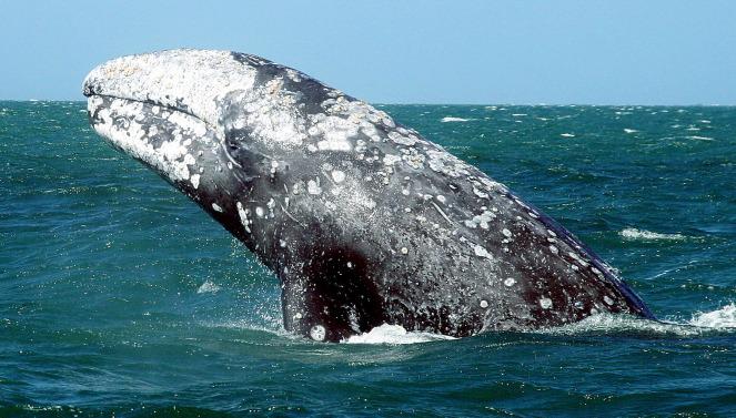 Удивительные факты о китах