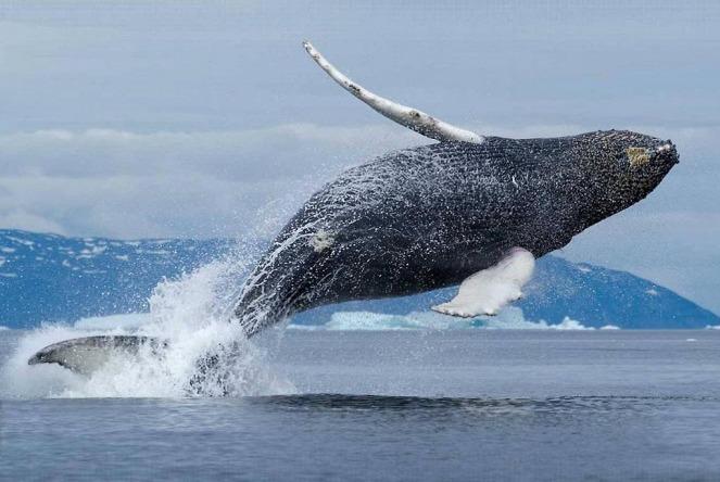 5 удивительных фактов о китах