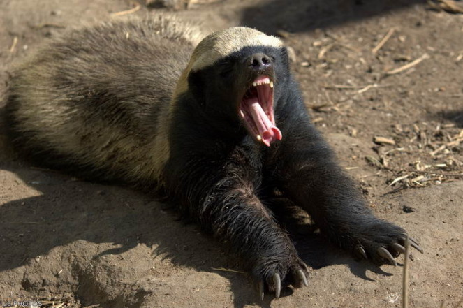 10 животных прославившихся своим неадекватным поведением