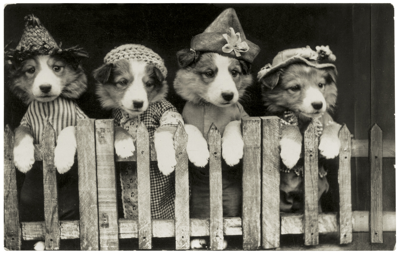 funny-vintage-dog-photography-costume.jp