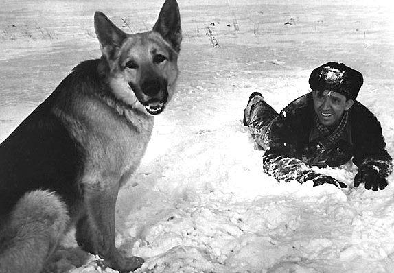 7 самых популярных пород собак в СССР