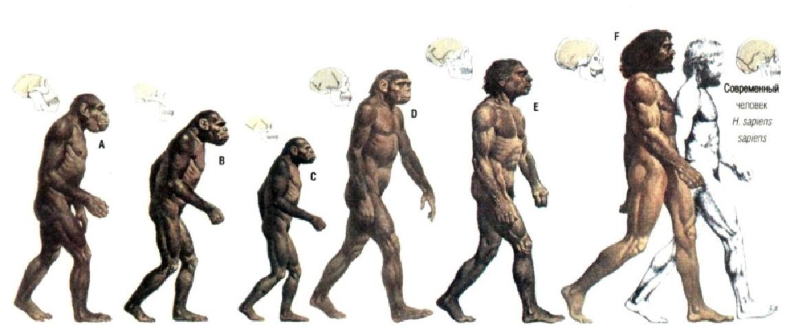 Как появился человек Русская семерка Дарвинизм
