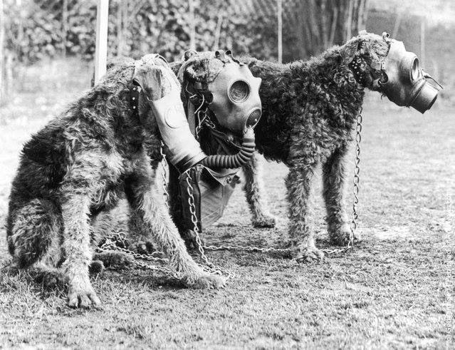 Как собака стала другом человека (6 фото)
