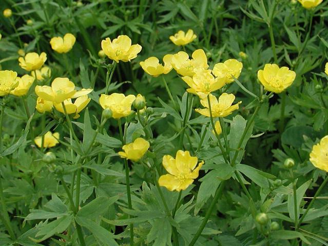 Мелкие желтые цветы фото и названия