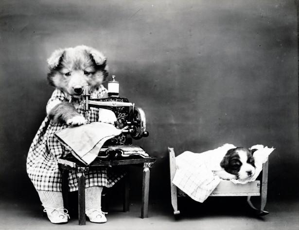 Из истории приручения собаки человеком