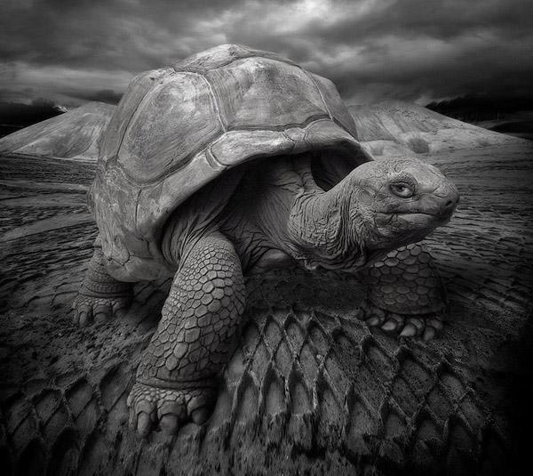 Картинки по запросу Какие животные живут дольше 100 лет