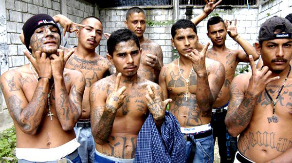 the ms 13 crisis in america