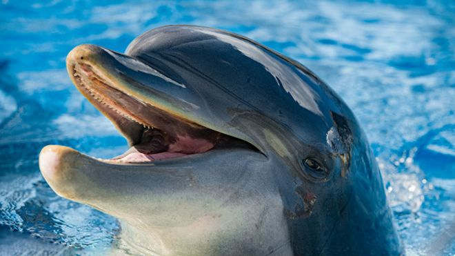Первая Беседка. - Страница 6 160216102956_dolphin_smiling_624x351_thinkstock_nocredit