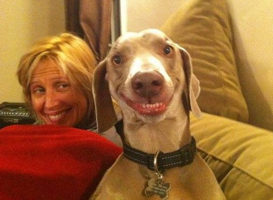Картинки по запросу статья о сходстве собак и их хозяев