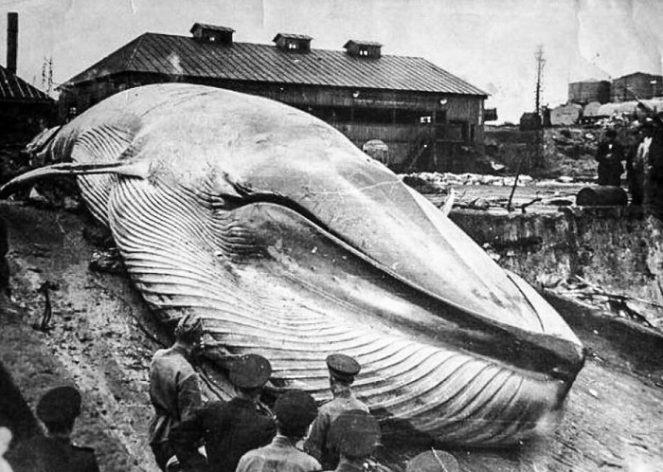 Курильская катастрофа: как в ноябре 1952 года цунами смыло целых город