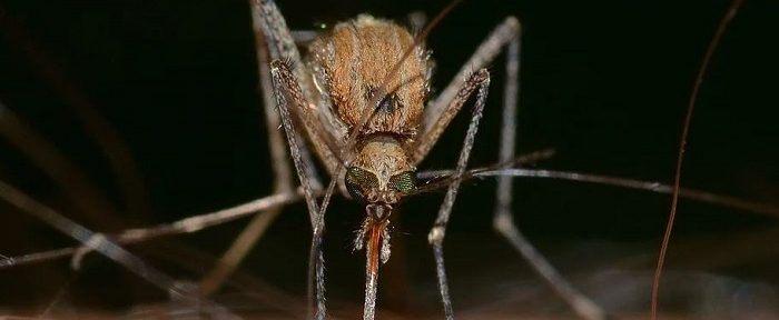 Почему одних людей комары кусают меньше, а других больше